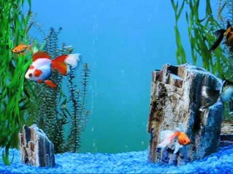 My Windows XP fish aquarium screensaver (vid#2)   YouTube