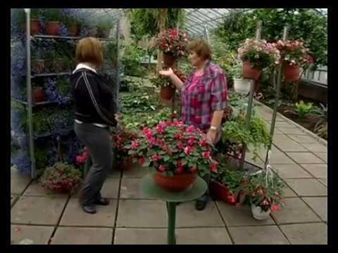 Сад и огород. Ампельные (подвесные) растения.