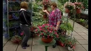 Сад и огород. Ампельные (подвесные) растения.(, 2012-02-23T06:52:59.000Z)