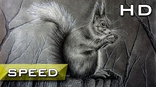 Speed Drawing Red squirrel with Pencil - Timelapse