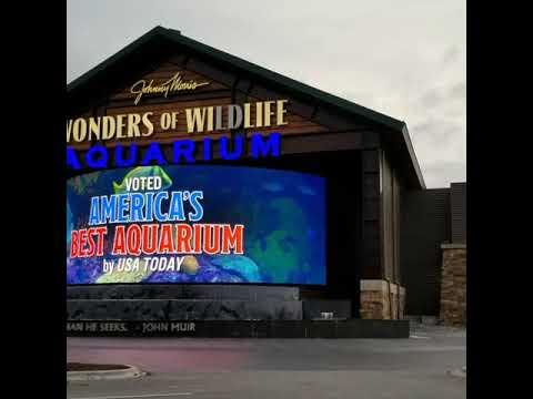 Wonders of Wildlife Aquarium at Bass Pro Shop Springfield ...