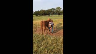 Clinton Anderson: Training Young Horses to Stand for the Farrier - Downunder Horsemanship