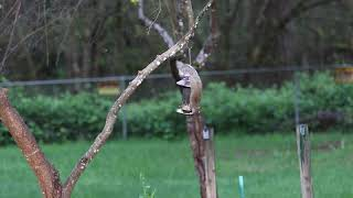 Squirrel eating from bird feeder