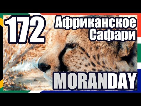 Moran Day 172 - Африканское Сафари (ЮАР) 🇿🇦