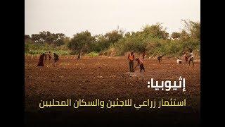 إثيوبيا: استثمار زراعي للاجئين والسكان المحليين