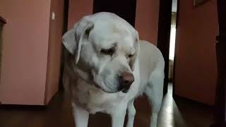 Есть ли у собаки душа
