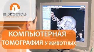 Компьютерная томография для животных. 💻 Безопасна ли компьютерная томография для животных?