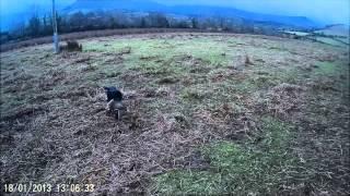 Rough Woodcock Shooting Ireland 27th January 2015