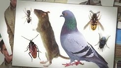 Spring Cleaning Tips for Effective Pest Control in Weston | Accurate Pest Control, Inc.