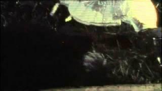 Смотреть клип Агата Кристи - Топь