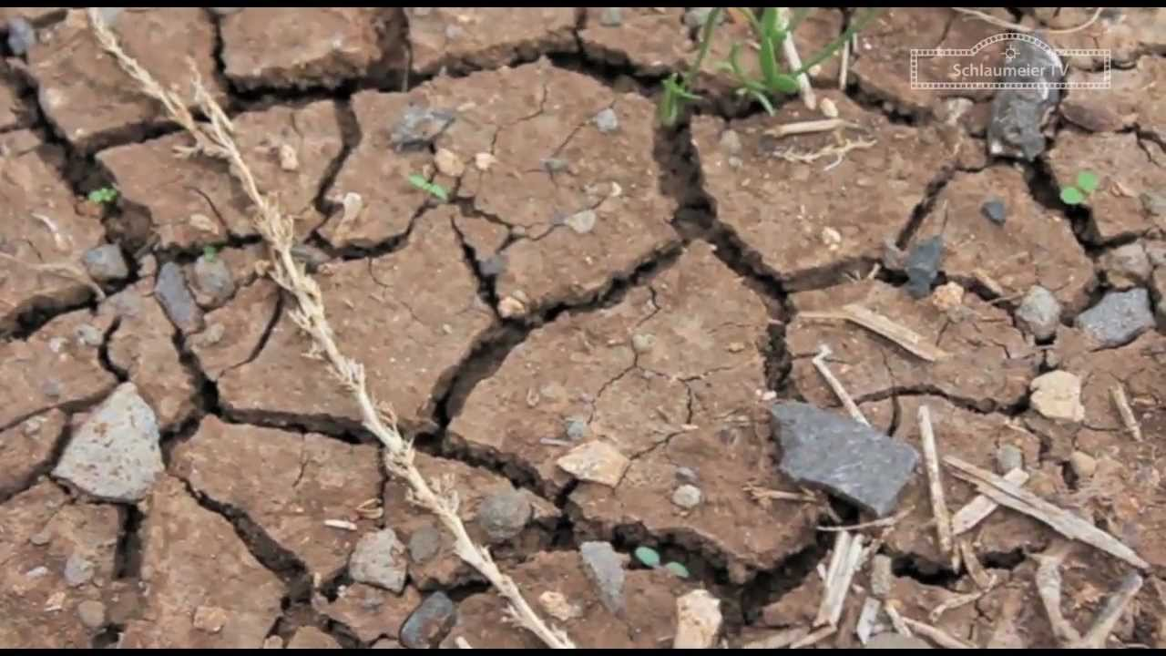 Versalzung Des Bodens