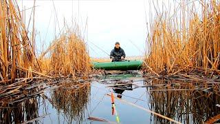 Крупные караси на ПОПЛАВОК в КАМЫШЕ Рыбалка на поплавок