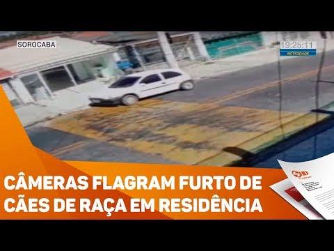 Câmeras flagram furto de cães de raça em residência - TV SOROCABA/SBT