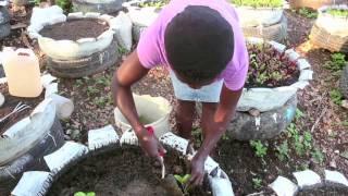 Haiti: Urban Agriculture