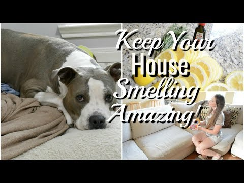 How To Make Your House Smell Good With Dogs!
