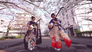 Shamisen Under The Cherry Blossoms 2017 - Ki&Ki 輝&輝 津軽三味線