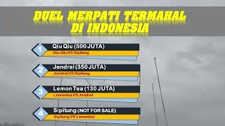 Video MERINDING Duel Merpati Termahal di Indonesia download MP3, 3GP, MP4, WEBM, AVI, FLV Oktober 2018