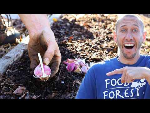 This Clever Method of Planting Garlic Makes it TOO EASY to Maximize Your Yield in the Garden