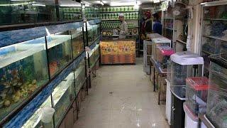 Divya Aquarium Pets Shop Pets Vlog Youtube