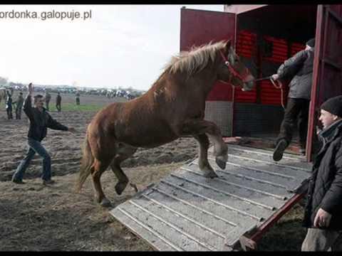 ycie koni przed i po rzeni  YouTube