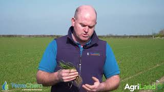 Terrachem CROPS WATCH: John Mulhare on Incite