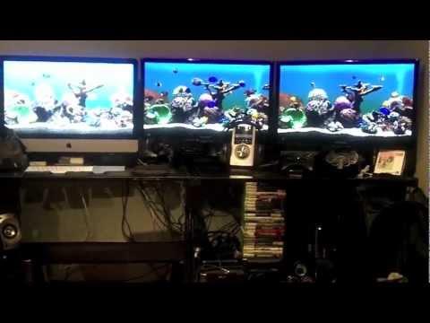 A Closer Look At My Virtual Marine Aquarium