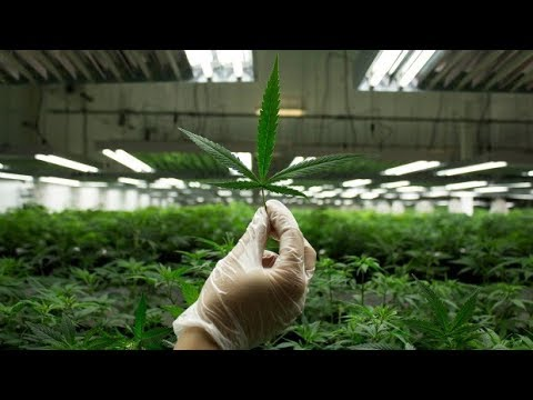 Legalizing weed: Is Canada ready? Q&A