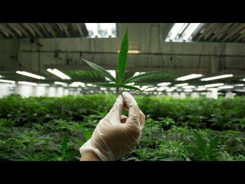 Cannabis business in Canada