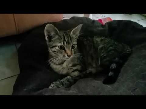 Trixie net gevonden en gered