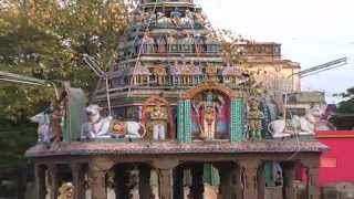 Virudhunagar mariamman temple and Theppam
