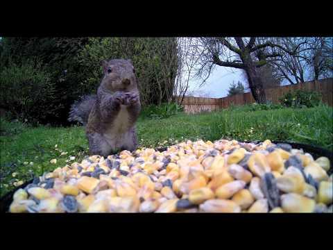GoPro Bird and Squirrel ASMR