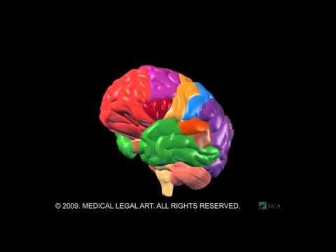 Não Bộ  Giải Phẫu Và Chức Năng