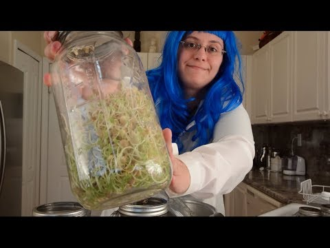 How to Grow Sprouts! | Sprouting Lentils at Home Using Either a Jar or a Bag!