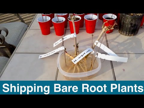 Shipping Bare Root Plants