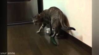 Коты и Опасные Огурцы   Cats Scared by Cucumbers