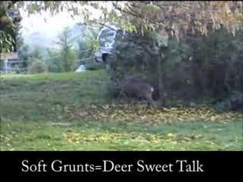 Buck Mating Sounds---Deer Sounds