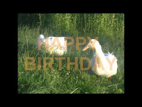 Geburtstagsgrüße Geburtstagswünsche Video: Donald Duck deutsch