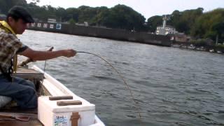 土佐和船 チヌ釣り タテにて