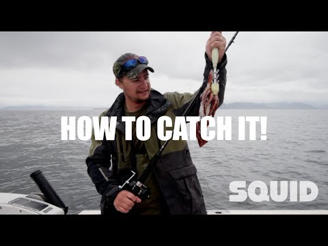 HOW TO CATCH SQUID! Catching Squid In Alaska