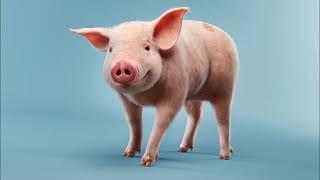 Поздравление в год Свиньи, веселое и доброе