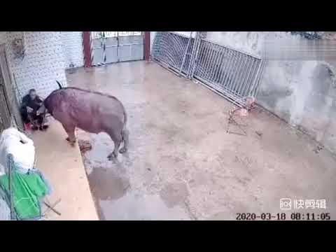 Бешеный бык мультфильм япония смотреть онлайн