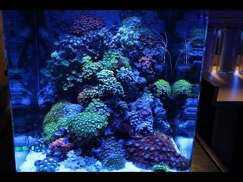 ReefTop Aquariums - Miami, FL [Local Fish Store Travel Ep. 10]