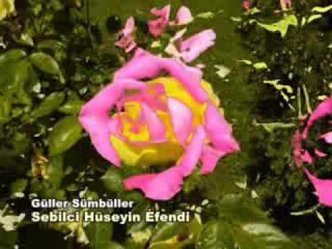 Güller Sümbüller