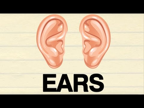 How To Pronounce \'EARS\' | कान | Pronunciation In HINDI | Parts Of ...
