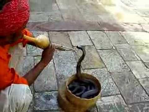 Un Encantador De Serpientes En Jaipur Youtube