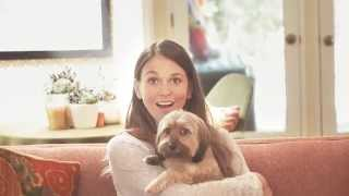 Sutton Foster And Her Dachshund Yorkie Puppy - Think Adoption First (petco)