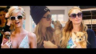 Paris Hilton's beloved chihuahua Tinkerbell dies | Breaking News