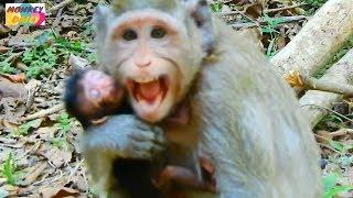 baby monkey pet