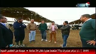 الجدعان   في مزارع الصفا لانتاج الآلبان الآمنة صحيا