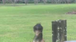 Emu at 8 Figure Adventurers